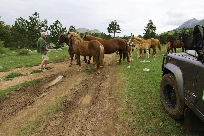 jeep-velebit-divlji-konji