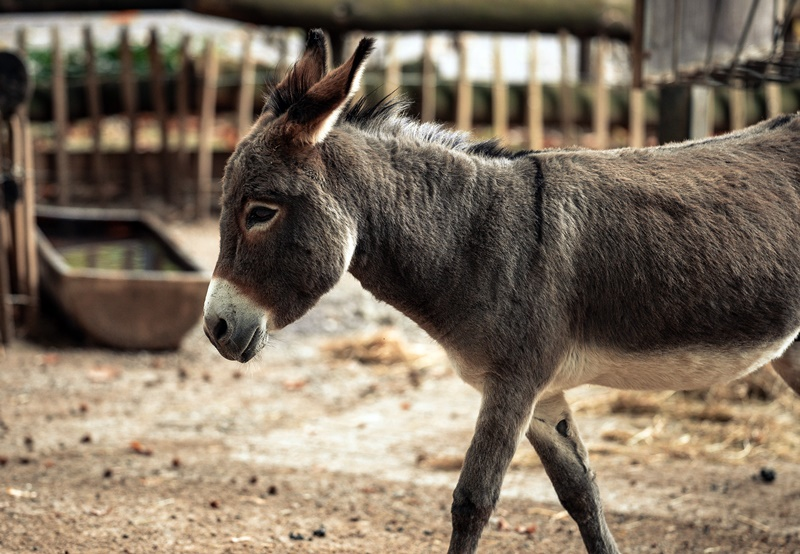 fun-activities-zadar-donkey-farm